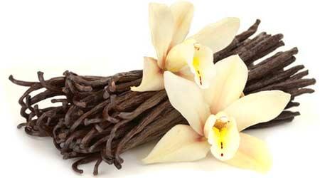 Vanilla-The Nobacconists